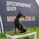 В Школе DRED осуществляется подготовка и обучение охранных собак для Вас.