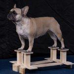 Хендлер, выставки, красивая собака, обучения на хендлера.