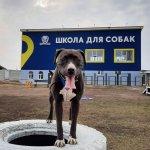 Дрессировка собак Ирпень, Буча, Ворзель, Обухов.