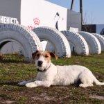 Площадка собак, занятие  с собаками, социализация собаки, кинолог.