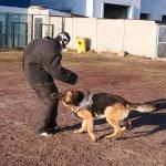 Охрана вещи, охрана ребенка, дрессировка охрана, охраняемая собака