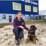 Школа для собак, обучения собак, кинолог, кинология