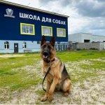 Школа для собак , обучения собак.