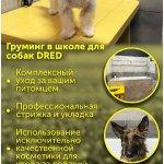 Груминг собак, стрижка любой сложности, стрижка когтей собак, экспресс линька.