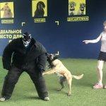 Подготовка щенка для охраны