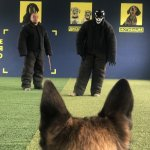 Дрессировка собак на охрану Киев и область