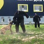Подготовка собак для охраны