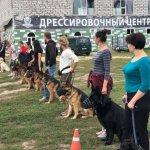 собаки площадка занятия
