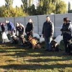 Дрессировка собак - коллективные занятия на площадке