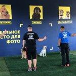 Дрессировка собак - спортзал для собак