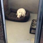Дрессировка собак - содержание щенков в школе
