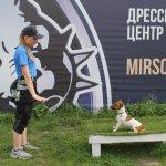 Дрессировка щенка на послушание - базовый курс