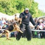 Подготовка собаки, послушание
