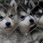 Купить щенка недорого любой породы