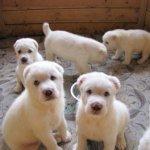 Купить щенка в Киевской области дешево